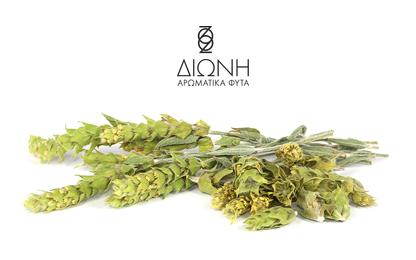 dioni-product-tea-1