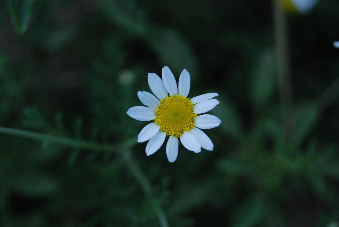 dioni-herbs-16