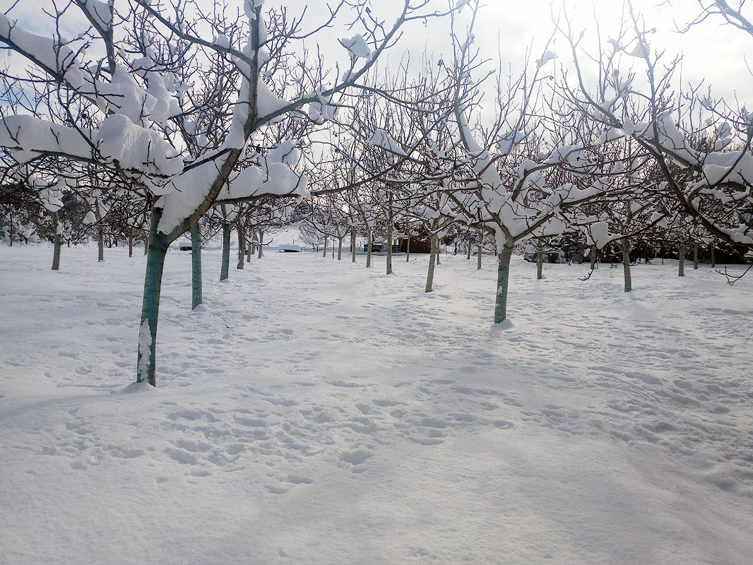 dioni-snow-6